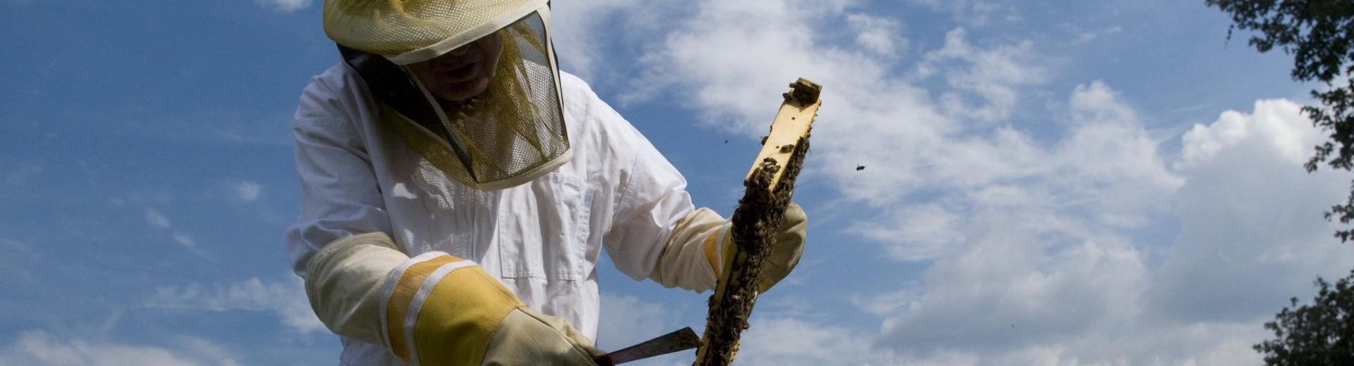 The Generous Beekeeper